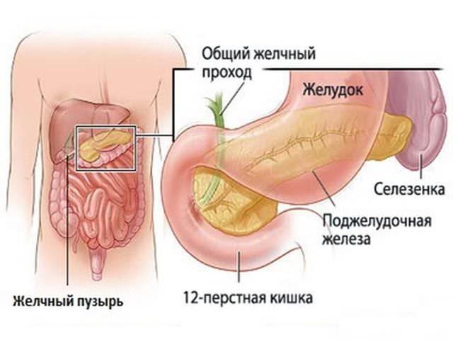 Диеты при болезни желчного пузыря